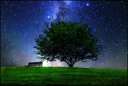 木と星空の画像