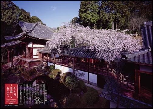 十輪寺 京都の画像
