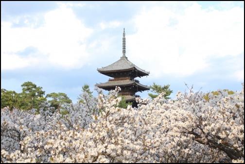仁和寺の画像
