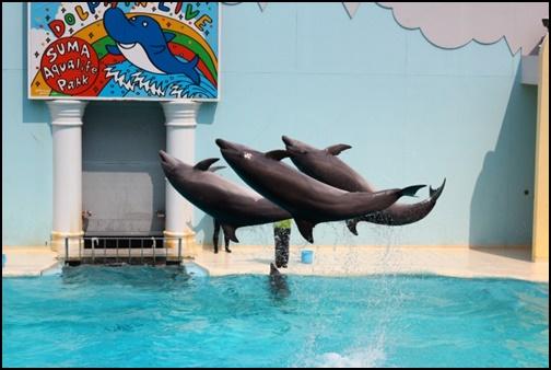 イルカの画像