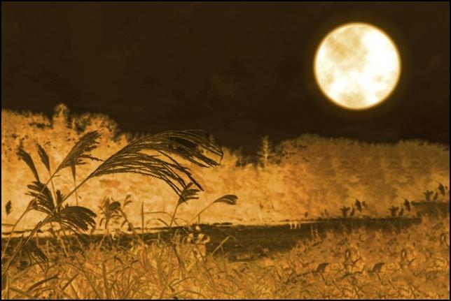 満月とすすきの画像